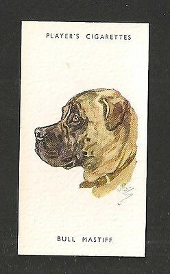 BULLMASTIFF Gamekeepers favourite companion on nightly rounds 1930's print card