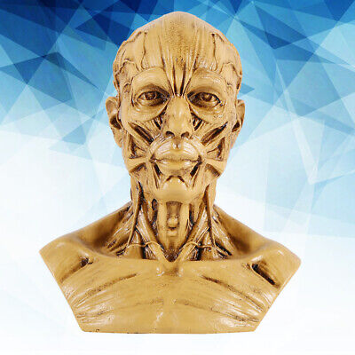 Human Anatomical Skull Head Muscle Bone Artist Painting Model Home Office Decors
