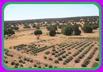 Beautiful 20 Acres~Many Trees/Good Roads~Heber-Overgaard Arizona~$290 A Month
