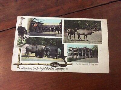 Postcard Private Mailing Card Greetings From Zoological Gardens Cincinnati Ohio