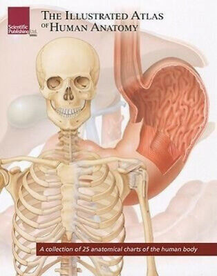 Illustrated Atlas of Human Anatomy: A Collection of 25 Anatomical Charts of