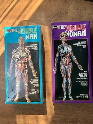 Revell Modell The Visible Man + Woman