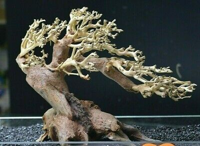 Bonsai Tree Ornament Aquarium Decoration - Wood - Large aquascaping redmoor moss