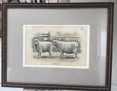 Antique Bookplate 1893 OXFORD DOWN SHEEP  UK engraving LXVII Framed Matted RARE