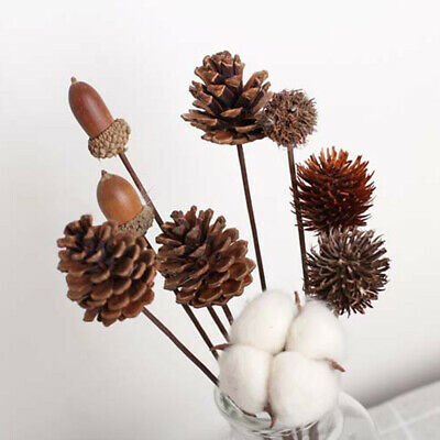 Dried Flower Natural Pine Cone Decor Dried Flower Photography Decor Latest Nice