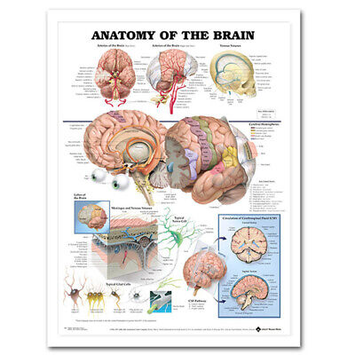 Applied Anatomy Of The Brain Poster Anatomical Silk Cloth Chart Human Body