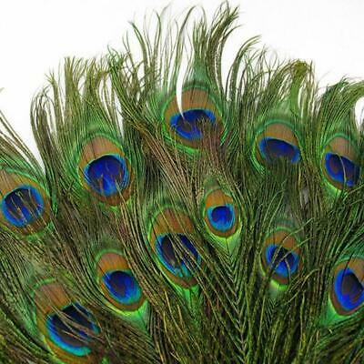 50pcs Peacock Feathers Tail Natural Long For Bouquet DIY Decoration 10-12 inch