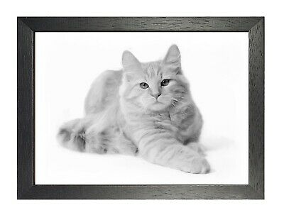 Siberian Cat Painting Poster Beautiful White Pet Picture Sweet Kitty Print Photo