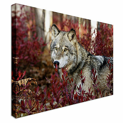Wild wolf-animals Canvas Wall Art Picture Print
