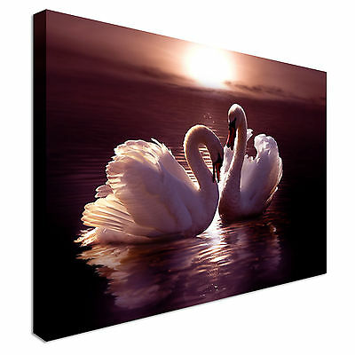 Swans in Love Purple Lake Canvas Wall Art Picture Print