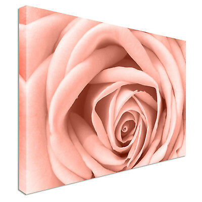 Pink Rose Flower Close Up Floral Canvas Wall Art Picture Print