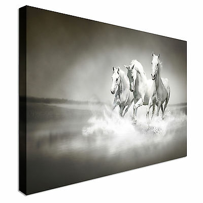 Herd Of White Horses Running Through Water Canvas Wall Art Picture Print
