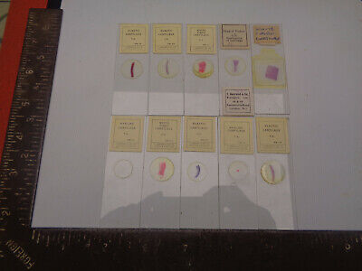 Set of 10 vintage prepared microscope slides T.Gerrard LOTMA2TR