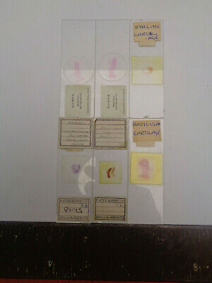 Set of 6 vintage prepared microscope slides T.Gerrard LOTMW2TN8