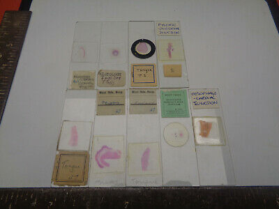 Set of 9 vintage prepared microscope slides LOTML755W68