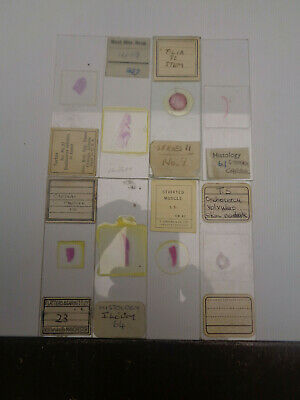 Set of 8 vintage prepared microscope slides LOTMTS78E