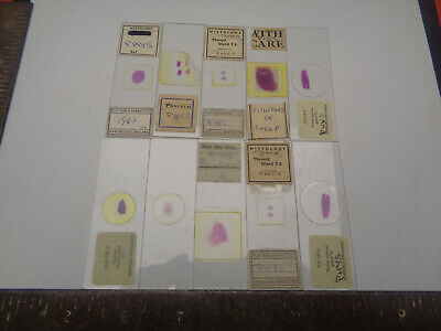 Set of 10 vintage prepared microscope slides LOTM299TGE