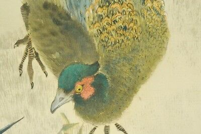 "PHEASANT HANGING SCROLL 77.6"" JAPANESE PAINTING Old JAPAN VINTAGE AGED ART c669"