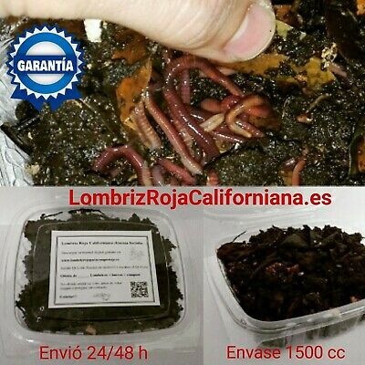 Lombriz Roja Californiana 100 uds R.Local