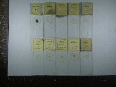 Set of 10 vintage T.Gerrard prepared mammalian microscope slides LOTMTV669
