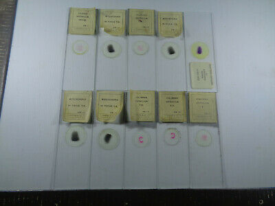 Set of 10 vintage T.Gerrard prepared mammalian microscope slides LOTMSFF9T3