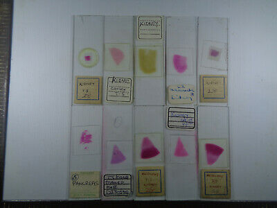 Set of 10 vintage prepared mammalian microscope slides LOTMR2TT4