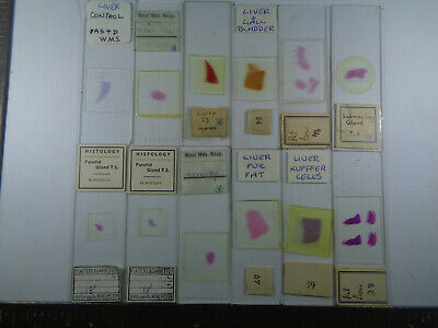 Set of 12 vintage prepared mammalian microscope slides LOTMSSQ88