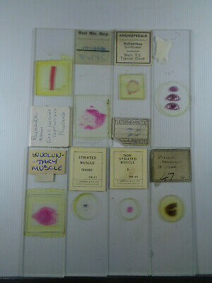 Set of 8 vintage prepared mammalian microscope slides LOTMEE1CL