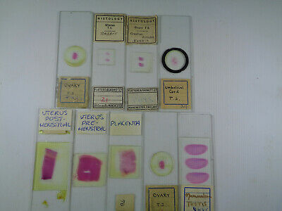 Set of 9 vintage prepared mammalian microscope slides LOTMIC4FSS