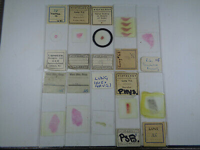 Set of 10 vintage prepared reptile & mammalian microscope slides LOTM66342L