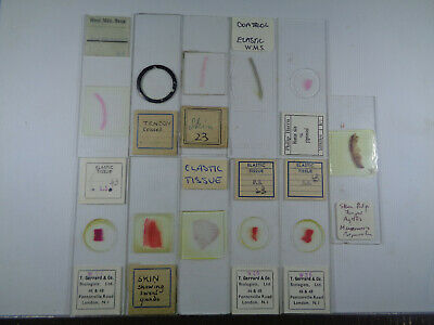 Set of 11 vintage prepared mammalian microscope slides LOTMKN237