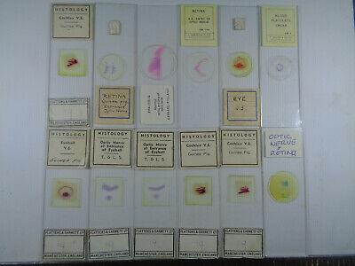 Set of 12 vintage prepared mammalian microscope slides LOTMS3EEQ