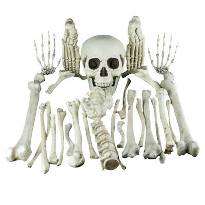 Skeleton Bones Skull 28pcs Set Prop Halloween Decoration Haunted House