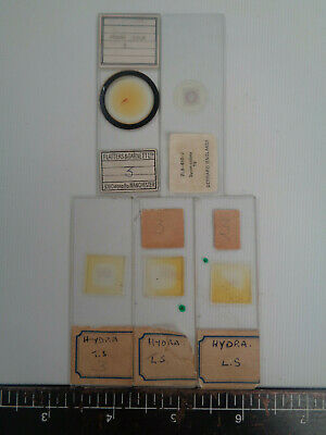 Set of 5 vintage prepared botanical microscope slides AO3TTK8A