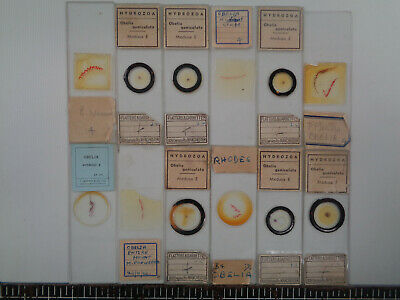 Set of 12 vintage prepared botanical microscope slides AO3FL98N