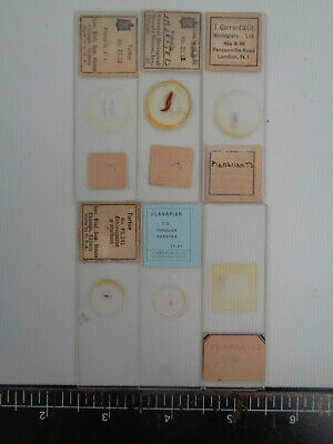 Set of 6 vintage prepared planaria microscope slides AO3W2BB7
