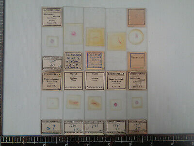 Set of 10 vintage prepared botanical microscope slides AO3TSSH91