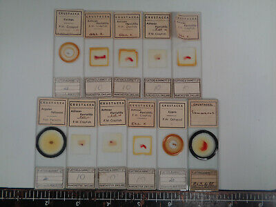 Set of 11 vintage Flatters prepared crustacea microscope slides AO3LL12H