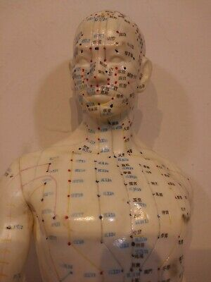 """20"""" Tall Acupuncture Rubber Male Doll W/ Wood Stand. Meridanal and extraordinary"""