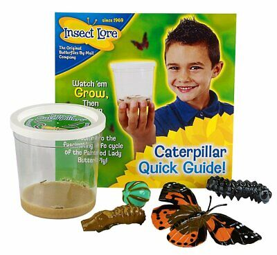 Insect Lore 5 Live Caterpillars-Butterfly Kit Habitat Refill