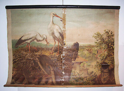 Role Map School Map Stork Storchs Nest Perthes Gotha 1920/30 Rare