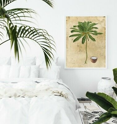 Wall Art, Print, Poster, Vintage Coconut Palm Tree, Tropical, Botanical Unframed