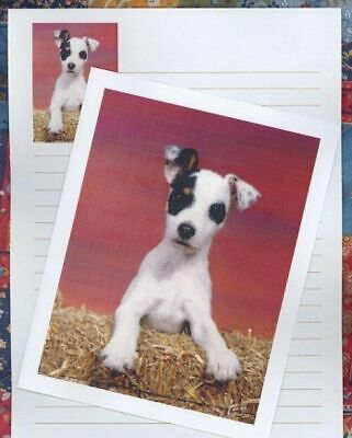 JACK RUSSELL TERRIER Set of 6 Note Cards with envelopes #0944