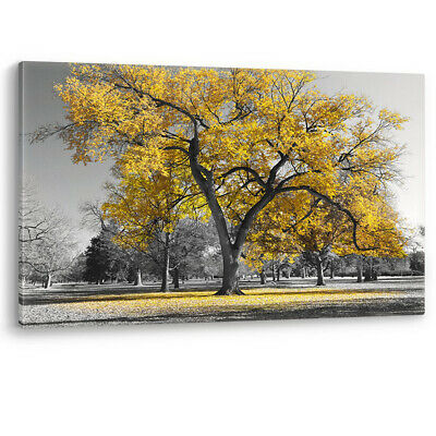 Large Tree Yellow Leaves New York Nature Canvas Wall Art Picture Print Black Wht