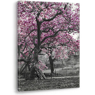 Black and White Wall Art Purple Pink Blossom Trees Bicycles Canvas Picture Print