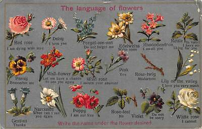 The Language of Flowers, Daisy Forget me not Edelweiss Wild Rose Poppy Postcard