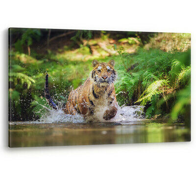 Siberian Tiger Running in Water Splash Large Canvas Wall Art Picture Print A0 A2