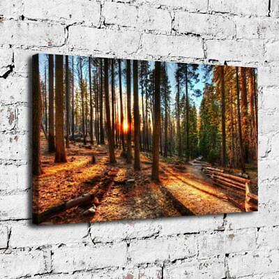"12""x20""A Path In The Woods HD Canvas Prints Home Decor Picture Wall Art Poster"