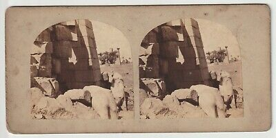 Francis Frith - Views in Egypt and Nubia - Stereoview - c1857 Colossi at Karnac