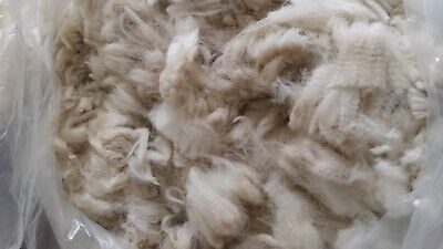 Raw alpaca fleece white 500 grams